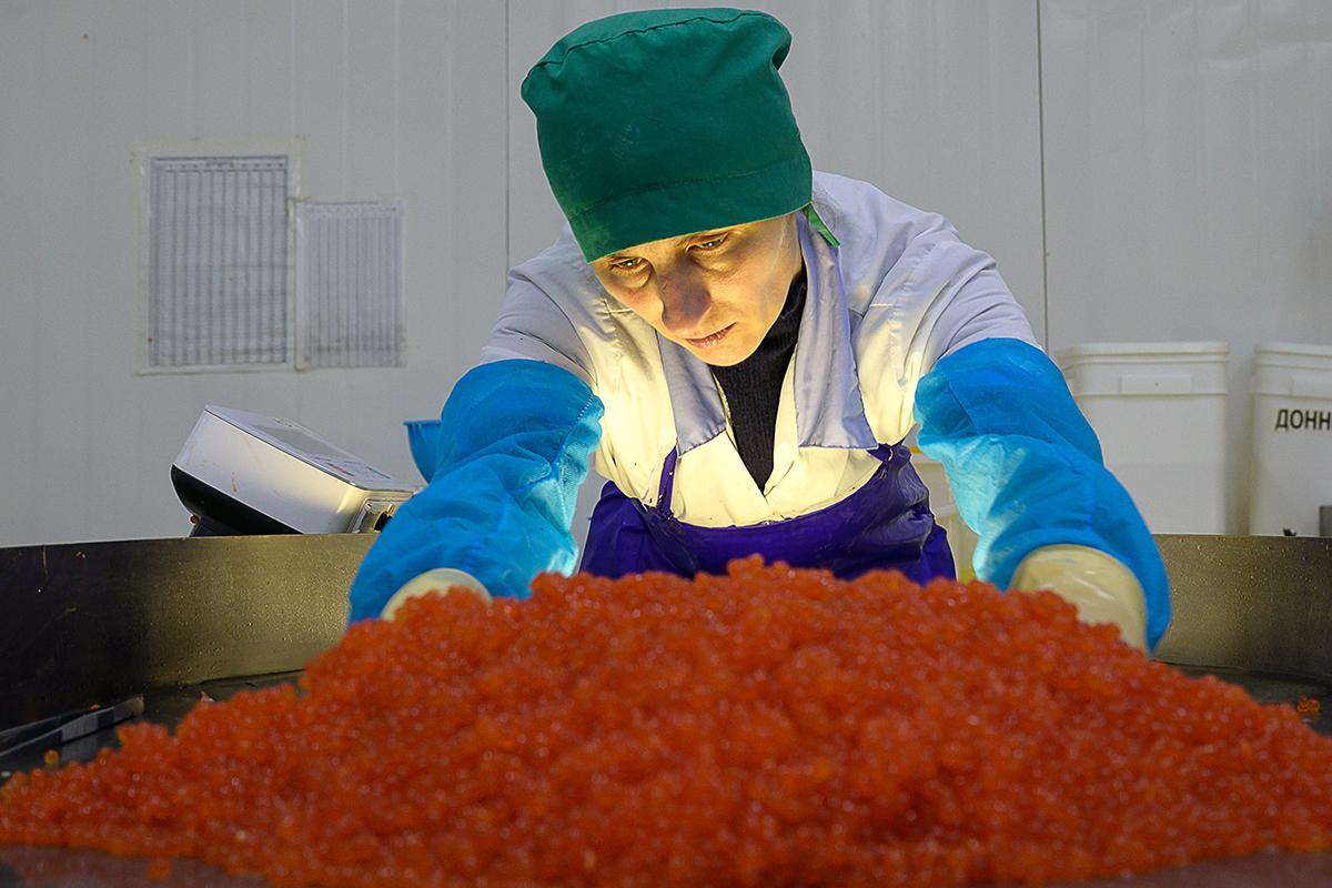 Браконьеры или любители деликатесов. Зачем россияне возят красную икру тазами ипочему имхотят это запретить